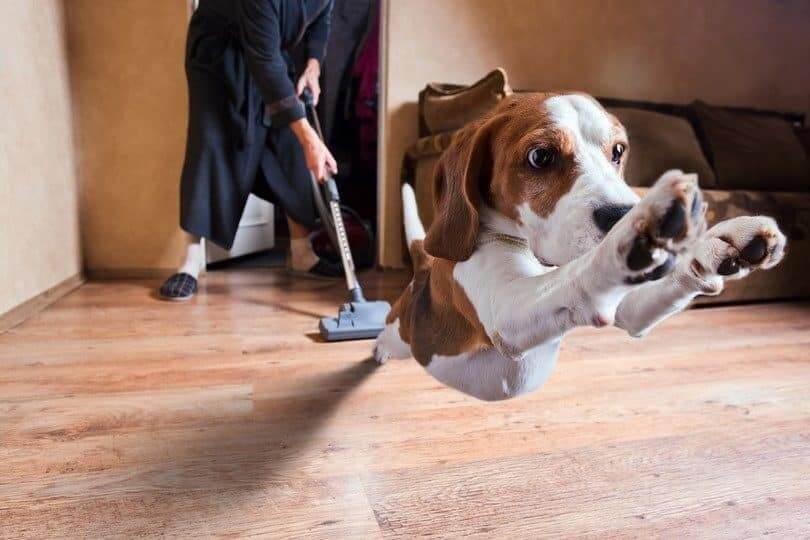 Best Vacuums For Pet Hair in September 2019 - Buying Guide